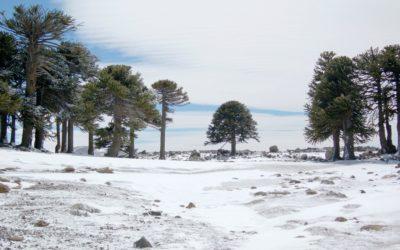 Touring Primeros Pinos In Argentina